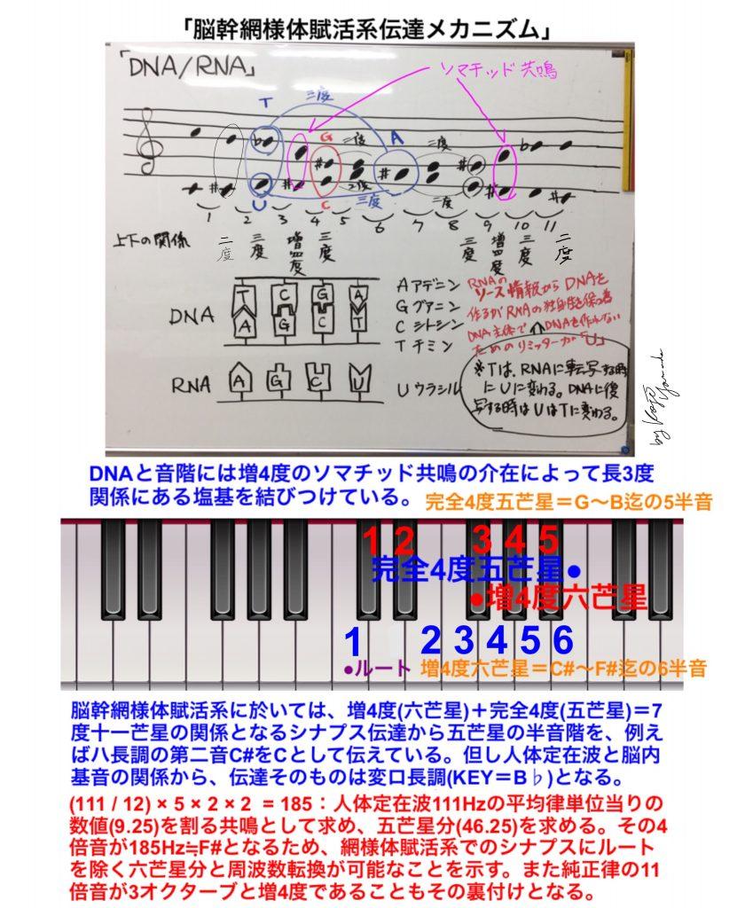 DNA音階