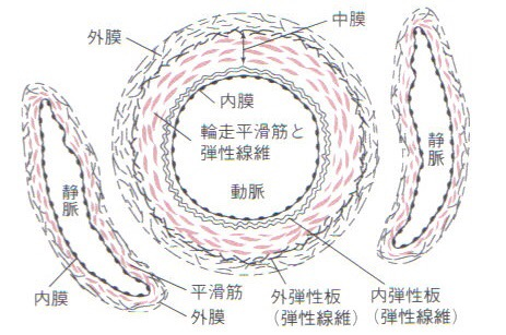 図_血管ー