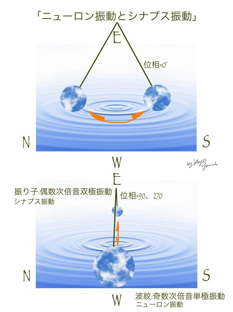 図_ニューロン振動、シナプス振動