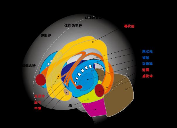 図_レンズ核
