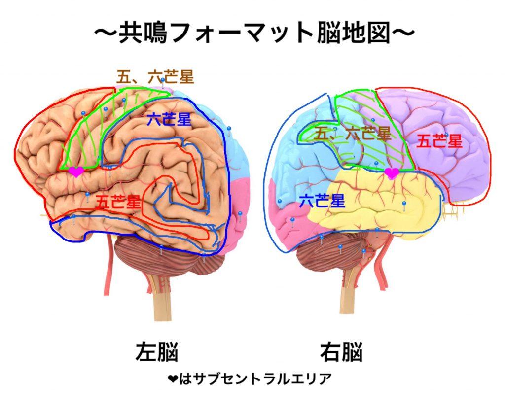 図_大脳五芒星、六芒星エリア