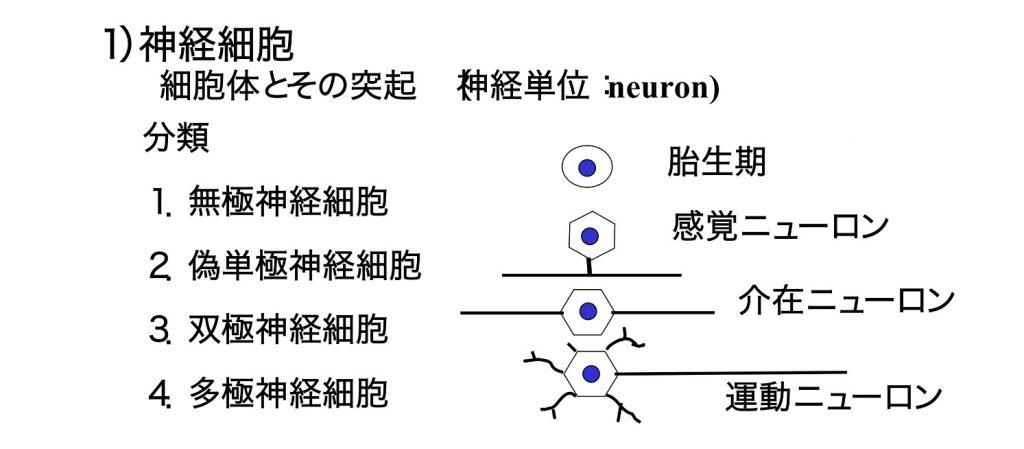 図_神経細胞