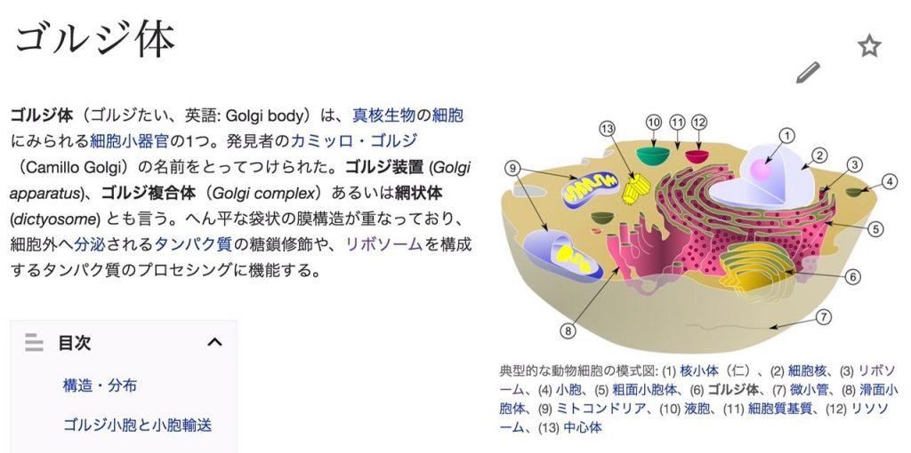 図_ゴルジ体