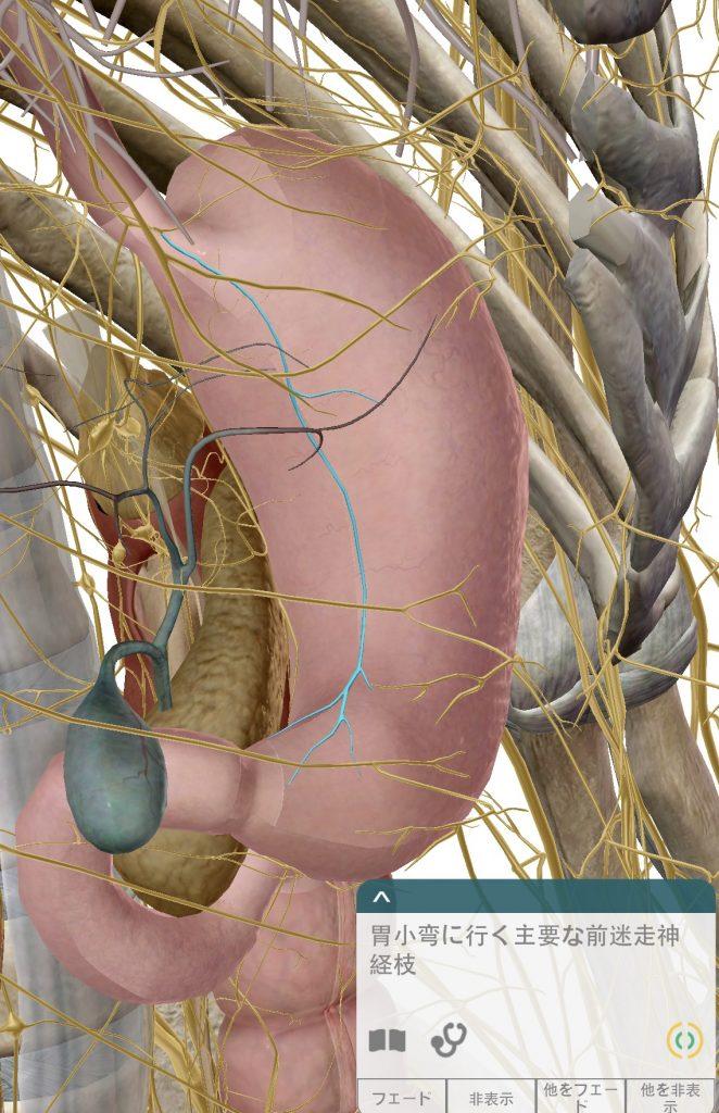 胃部迷走神経2