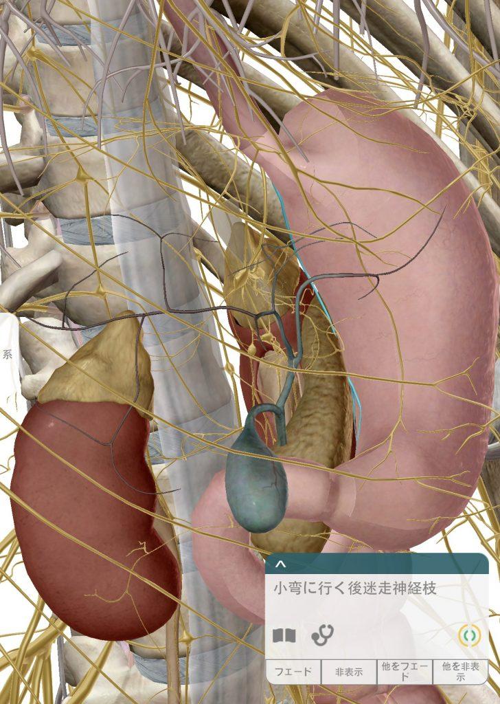 胃部迷走神経1
