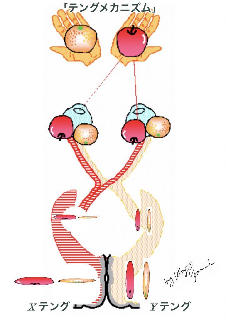 視神経と視交叉、視覚野-バカボン流-