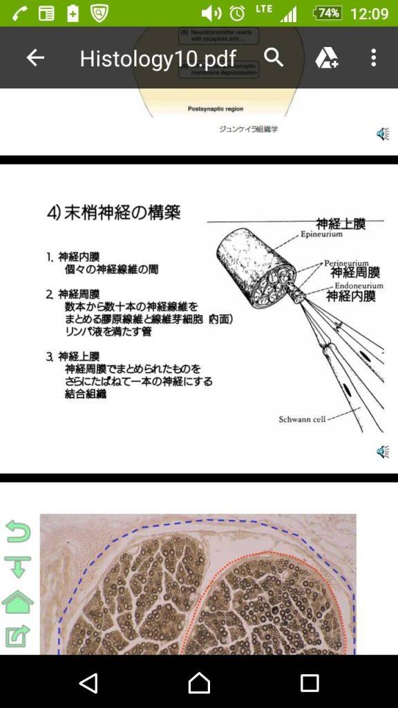 図_神経周膜